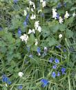 Bluebells and nettles