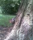 Squirrel on tree-trunk